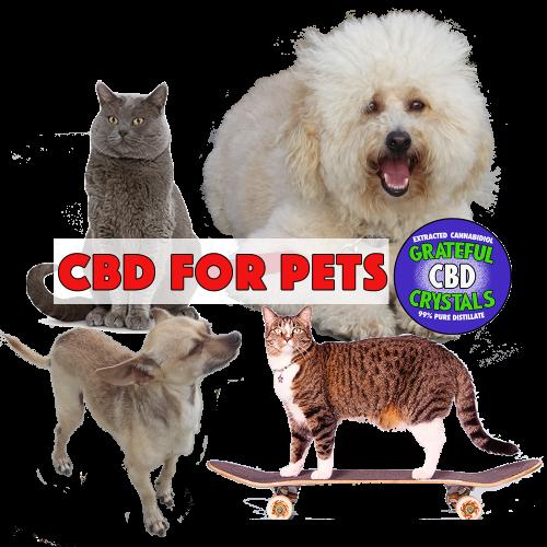 Pet CBD Hemp CBD Cannabidiol for pets