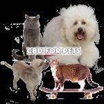 Hemp CBD Cannabidiol for pets