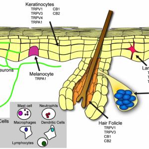 Jon Balm - Topical CBD Roll On - 100mg CB receptors in our skin